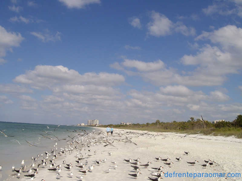 03-Naples-Beach-Florida
