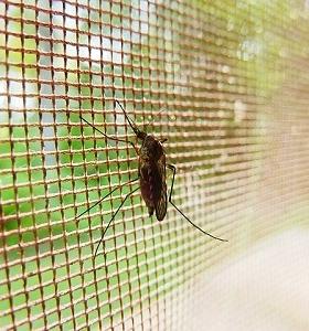 tela-mosquiteira