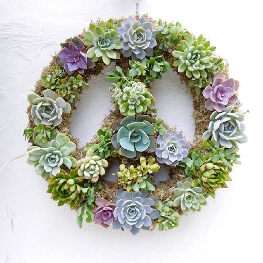 DIY Decor : Paz e Amor - o símbolo da Paz - suculentas
