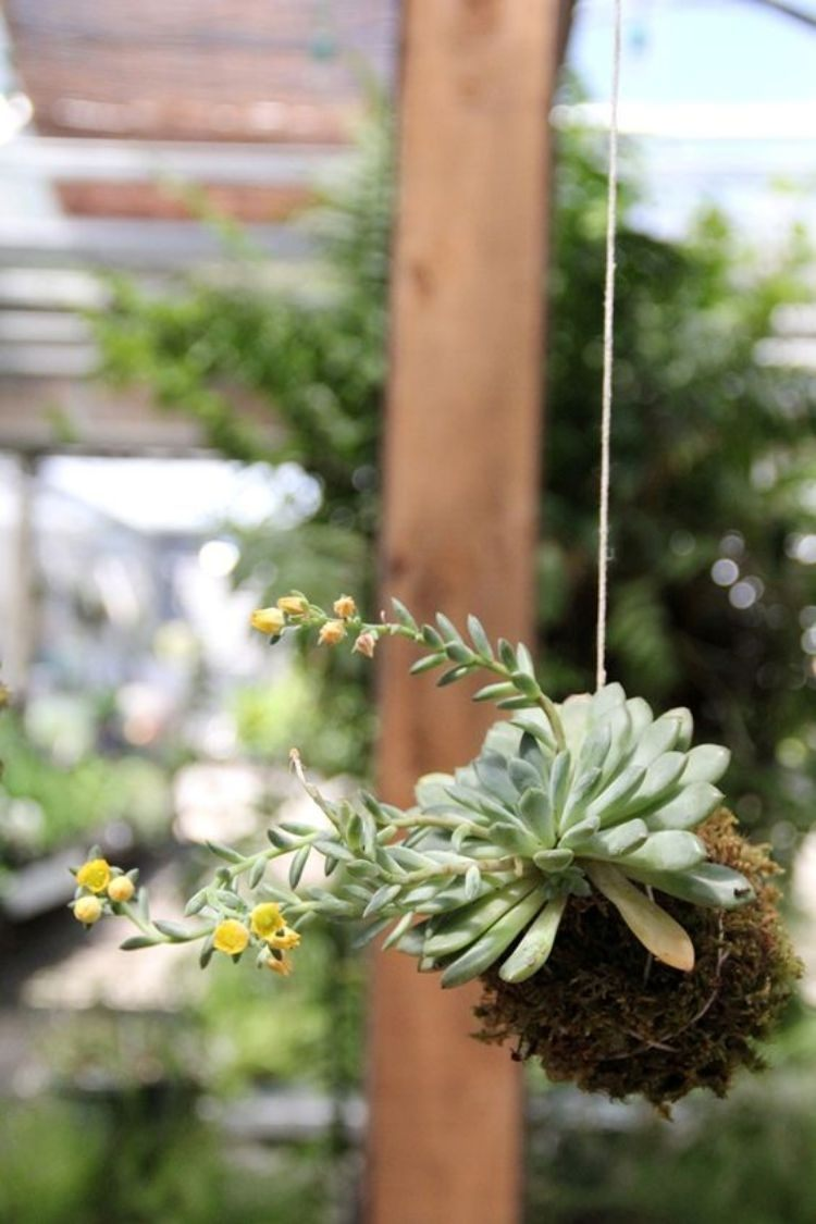DIY: 25 ideias para plantar utilizando a arte do kokedama