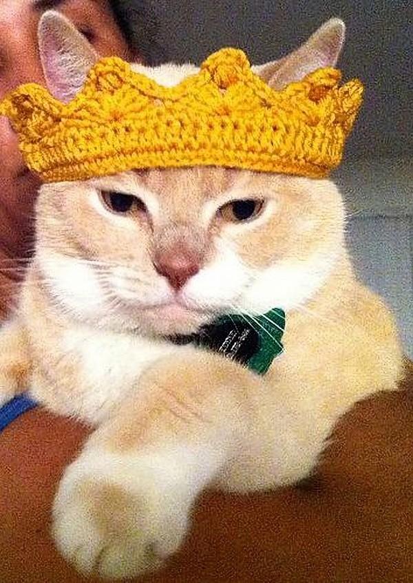 14 modelos divertidos de chapéus para pets