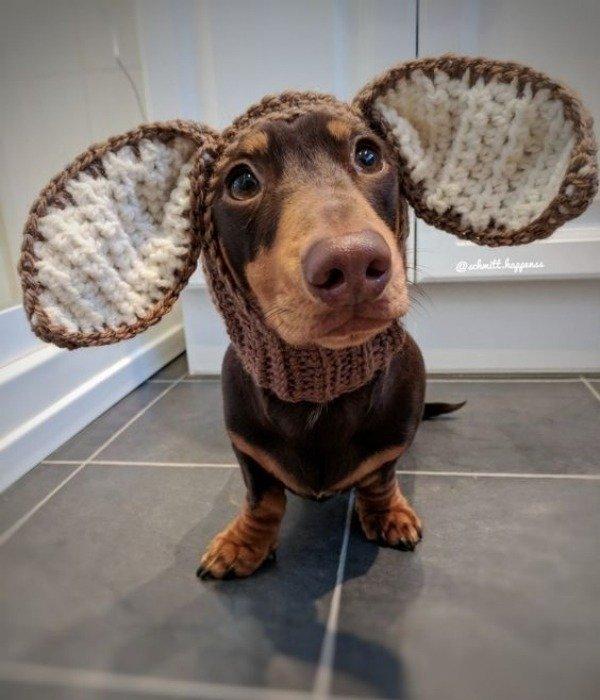 15 Ideias divertidas de chapéu para cachorros