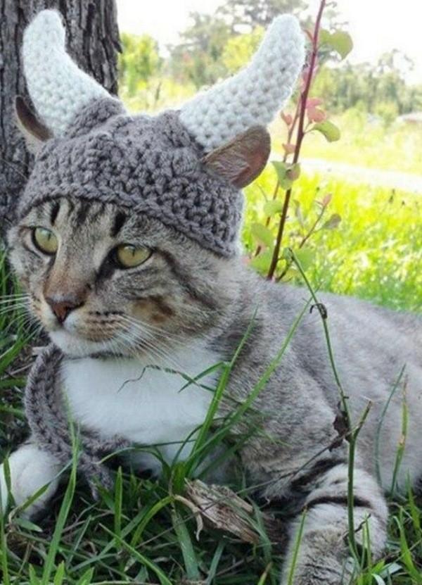 12 Inspirações de chapéu para gatos criativos e divertidos