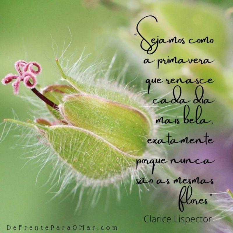 """""""Sejamos como a primavera que renasce cada dia mais bela, exatamente porque nunca são as mesmas flores"""" disse Clarice Lispector"""