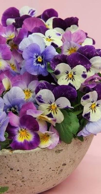 decoração - vaso amor-perfeito - ultravioleta