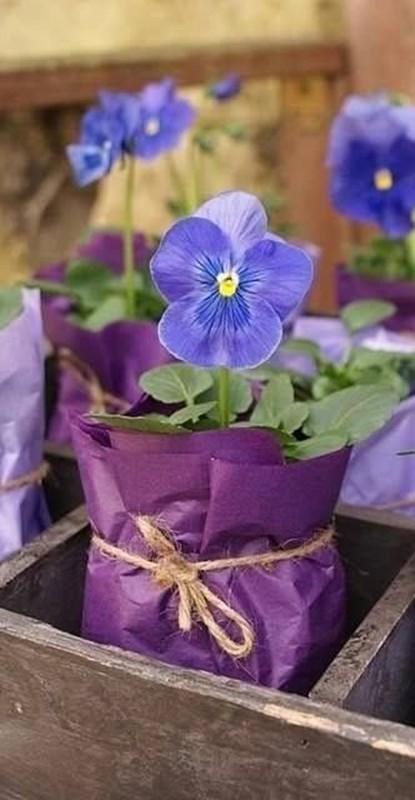 decoração ultravioleta - amor-perfeito