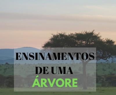 ENSINAMENTOS DE UMA ARVORE