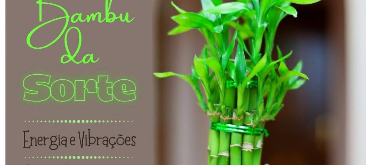 Bambu da Sorte - Energias e Vibrações e Como Presentear
