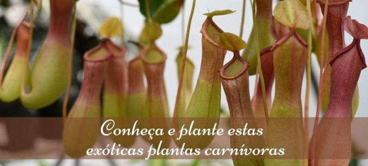 Conheça e plante estas exóticas plantas carnívoras